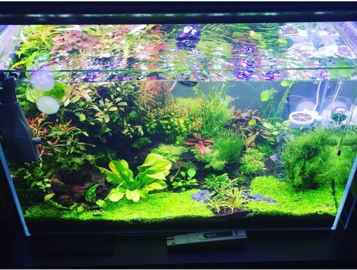 floating plants for aquarium